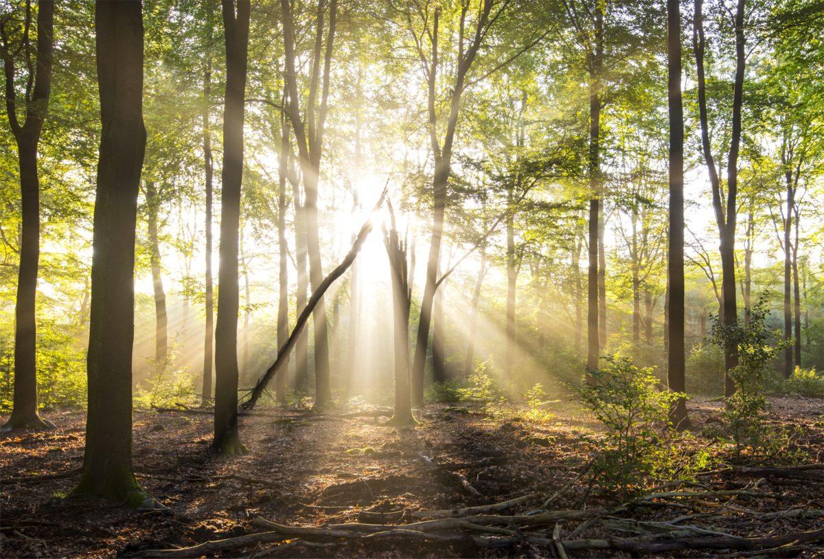 【7選】ブログ運営で、やってはいけないこと【木を見て森を見ず】